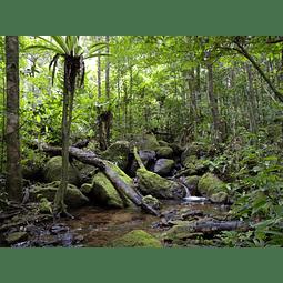 Recarga Mikado Rain Forest