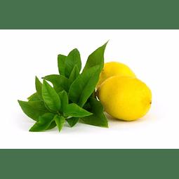 Esencia Nebulizador Limón Verbena SmellBlock