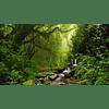 Esencia Nebulizador Rain Forest