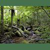 Mikado Rain Forest