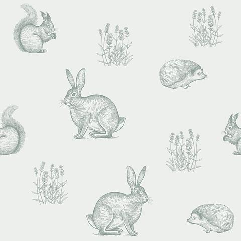 Animales del Bosque | Conejo