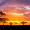 Fotomural Savana Africana