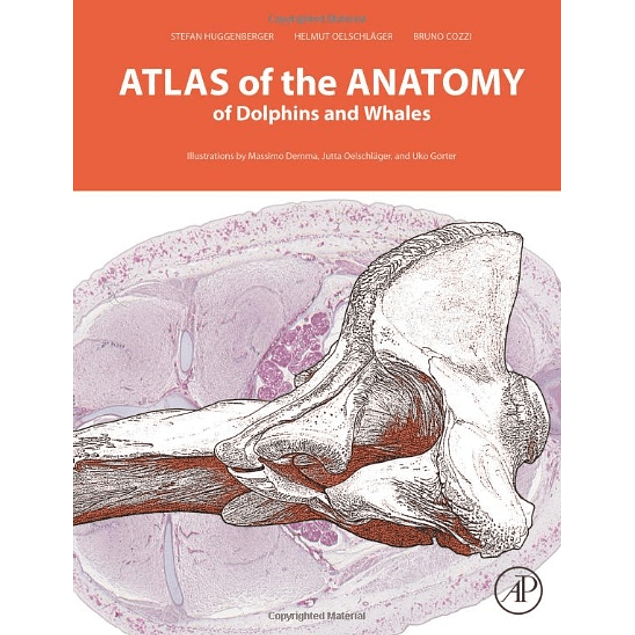 Atlas of the Anatomy of Dolphins and Whales