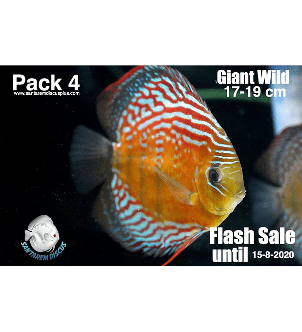 Pack 4 Giant Wild