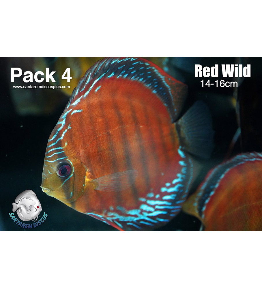 Pack Red Wild