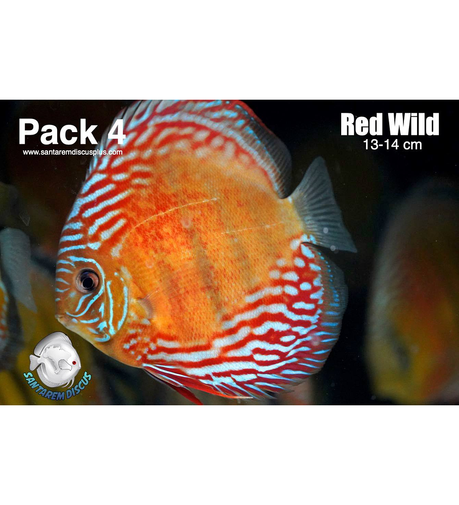 Pack 4 Red Wild