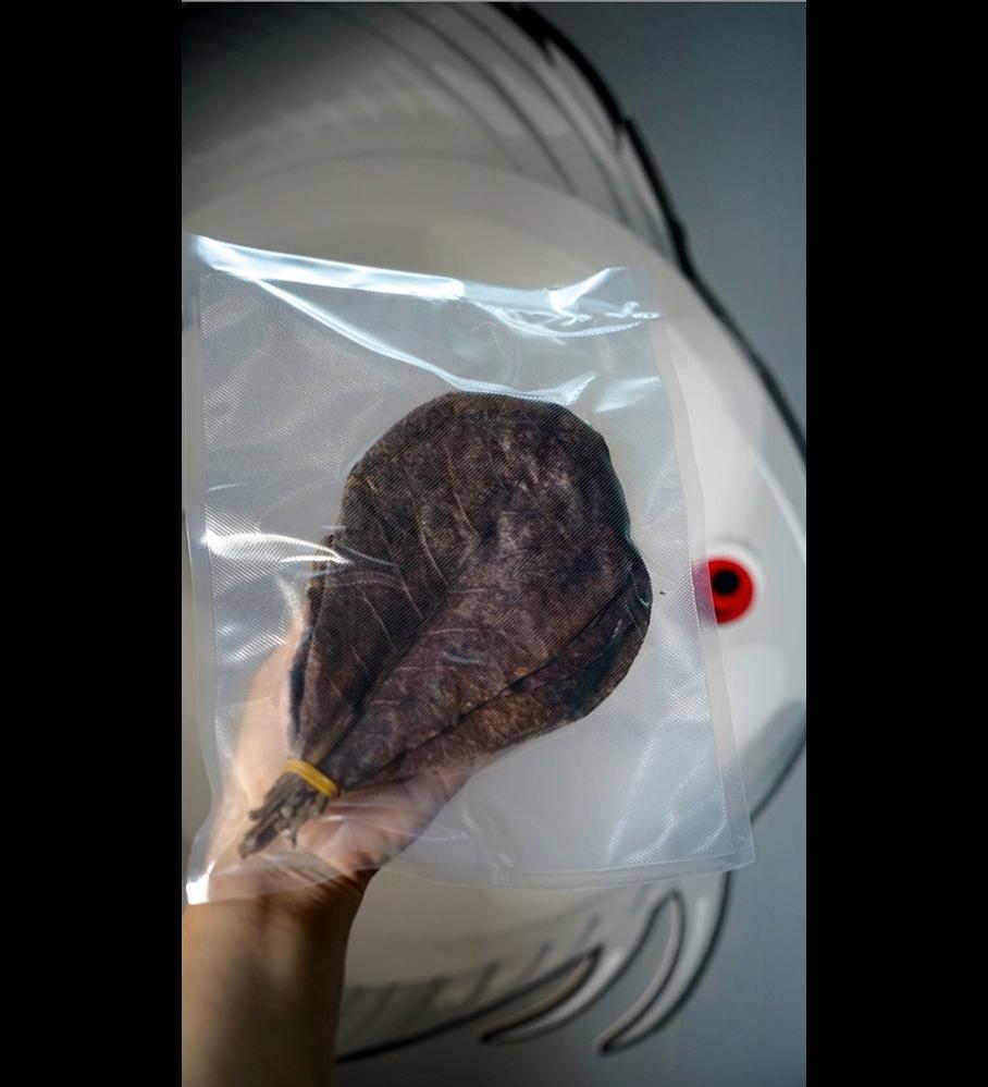 Terminalia catappa / Pack 20 units