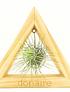 T. Andreana + Triángulo