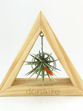 V. Espinosae + Triángulo