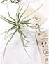 Colección de 5 plantas