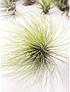 Colección de 10 plantas