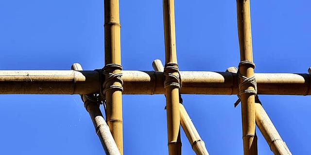 Bambú un recurso ecológico y sustentable