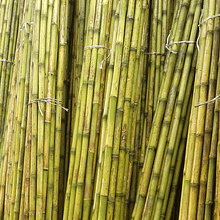 Bambú Colihue Fumigado, 20 unidades de 4mts