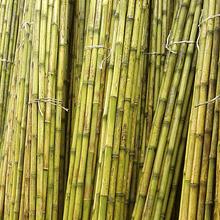 Bambú Colihue Fumigado, Largo 4 m