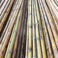 Bambú Colihue, 20 unidades de 4mts Fumigado