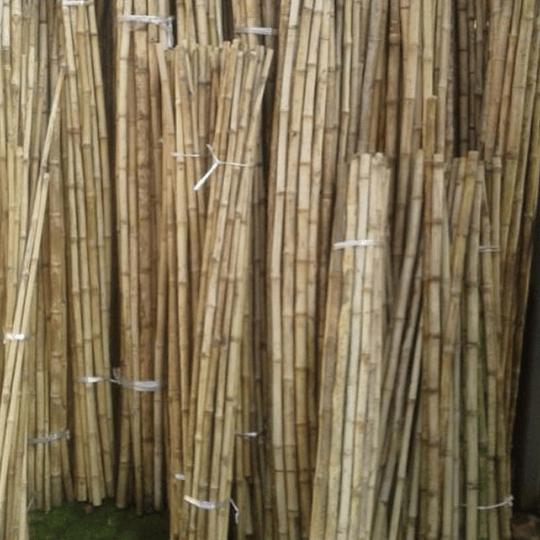 Tutor Cultivo Colihue sin seleccionar, 20 unid/paq - Image 2