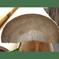 Media Caña Bambú Guadua
