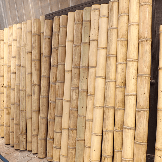 Bambú Asper dimensionado y preparado para decoración - Image 6