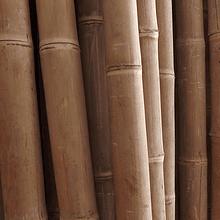 Bambú Asper