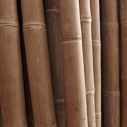 Bambú Asper Natural - Dimensionado