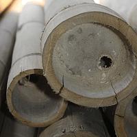 Bambú Asper en estado natural