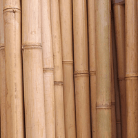 Bambú Aurea