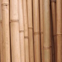 Bambú Aurea Natural - Dimensionado