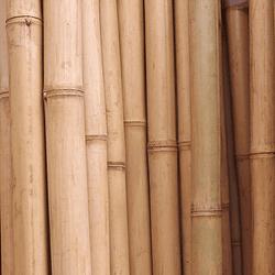 Bambú Aurea Natural - Dimensionado (AGOTADO)