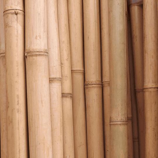Bambú Aurea Natural - Dimensionado - Image 1