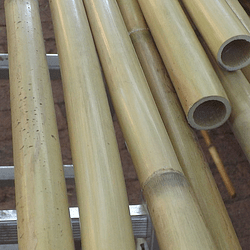 Bambú Carrizo Natural