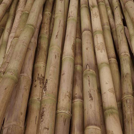 Bambú Colihue Seleccionado y pulido, 2,0 a 3,0 cm diámetro - Image 3