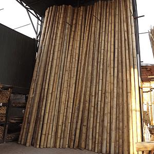 Bambú Guadua Natural  (DISPONIBILIDAD FINES OCTUBRE 2020)