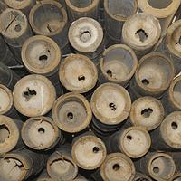 Bambú Asper Dimensionado