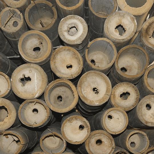 Bambú Asper dimensionado y preparado para decoración - Image 7