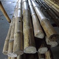 Bambu Colihue, seleccionada, limpia y pulida, diámetro 3 a 4 cm.