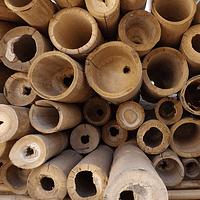 Bambú Guadua Dimensionada y preparado para decoración