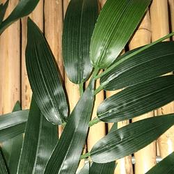 Hojas Artificiales de Bambú