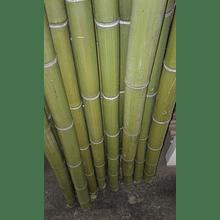 Bambú Moso, de 4 mts