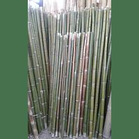 Bambú Moso dimensionado