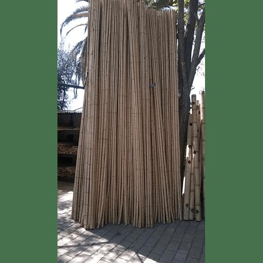 Bambú Aurea Natural - Dimensionado (AGOTADO) - Image 2
