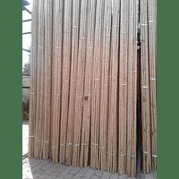 Bambú Aurea de 4 mts