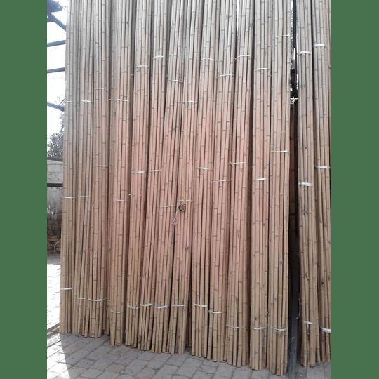 Bambú Aurea Natural - Dimensionado (AGOTADO) - Image 4