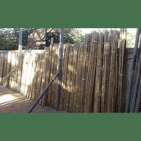 Tutor Cultivo Colihue sin seleccionar, 20 unid/paq - Image 6