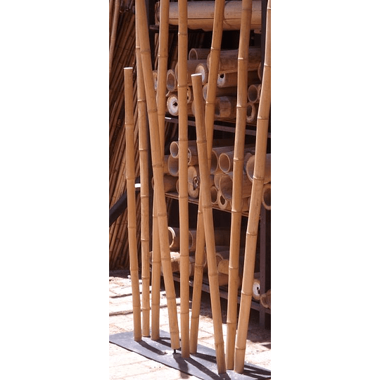 Bambú Aurea dimensionada y preparado para decoración (AGOTADO) - Image 1