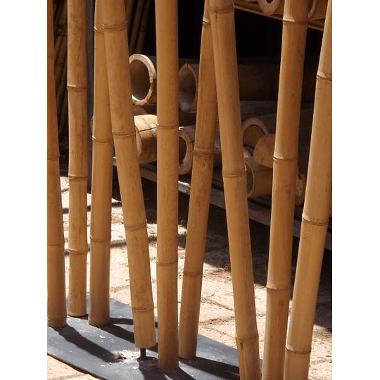 Bambú Aurea dimensionada y preparado para decoración - Image 2