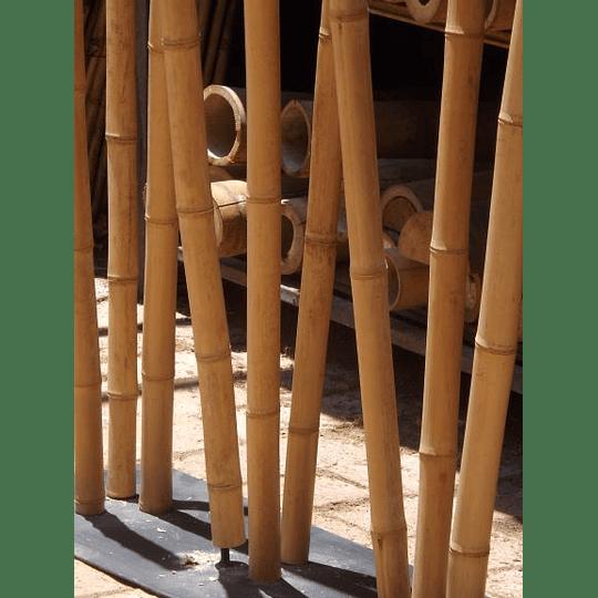 Bambú Aurea dimensionada y preparado para decoración (AGOTADO) - Image 2