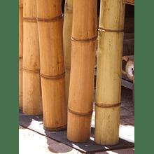 Bambú Asper dimensionado y preparado para decoración