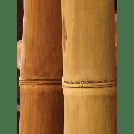 Bambú Asper dimensionado y preparado para decoración - Image 2