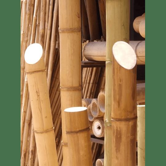 Bambú Guadua Dimensionada y Preparado para decoración - Image 4