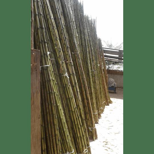 Bambú Colihue sin seleccionar, en bruto, largo 4 m. - Image 2